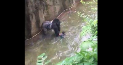 EXKLUSIVE Bilder von dem Gorilla-Vorfall in den USA!!