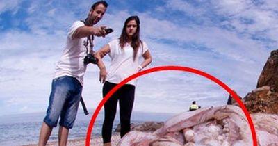 """So groß ist der """"Riesentintenfisch"""" wirklich!"""