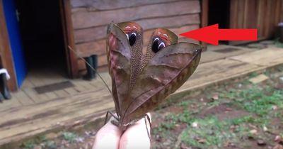Es sieht aus wie ein gewöhnliches Insekt! Aber als er das Tier umdreht? Nicht von dieser Welt...