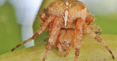 Darum solltest du Spinnen NICHT töten