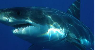 Bitte was?! Dieser Fisch frisst einen Hai mit EINEM Biss!