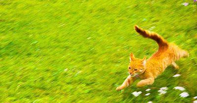Katzen-Rätsel: ACHTUNG, nur für kluge Köpfe!