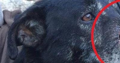Dieser Hund verlor bei einem Unfall seine Schnauze