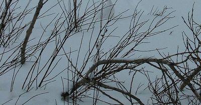 Bilderrätsel: Auf diesem Bild versteckt sich ein Alpenschneehuhn