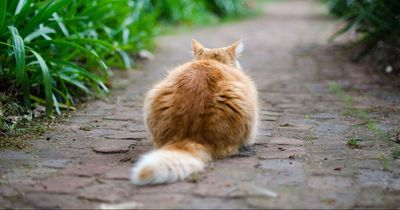 Du lässt deine Katze kommen und gehen, wie sie will?