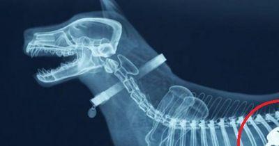 Was Tiere alles fressen: Die verrücktesten Röntgenbilder direkt vom Tierarzt