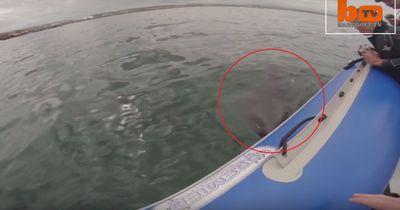 Horrorvideo: Weißer Hai attackiert Schlauchboot