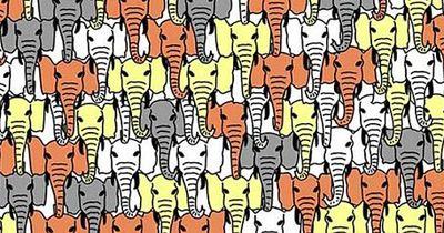 Rätsel: Finde den Panda!