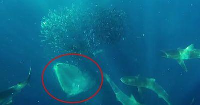 Dieser Taucher wurde fast von einem Wal verschluckt!