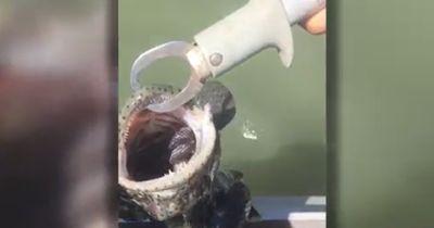 Er fischte erfolgreich an der australischen Küste. Sein Fang sorgte für einen Schock!