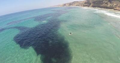 Wenn du so etwas im Wasser siehst, solltest du lieber an Land gehen
