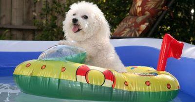 So machst du den Sommer für deinen Hund erträglicher