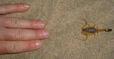 10 winzige Kreaturen, die dich töten können
