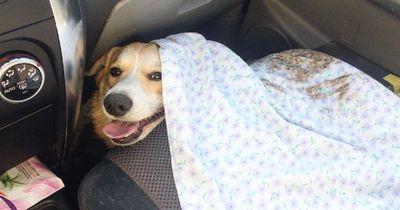 Hund im Auto: Das musst du unbedingt beachten!