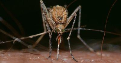 Mit diesen Ölen gegen Mücken!