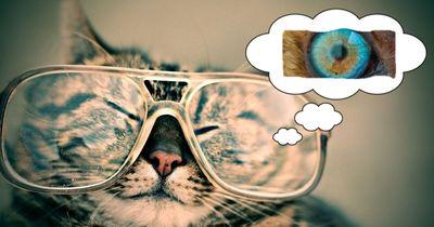 QUIZ: Welches Auge gehört zu welchem Tier?