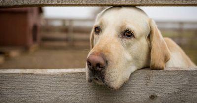 Wusstest du, dass auch Hunde Depressionen haben können?