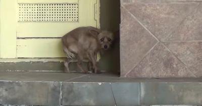 Dieser Straßenhund war völlig verstört. Aber 20 Minuten später? Unglaublich!