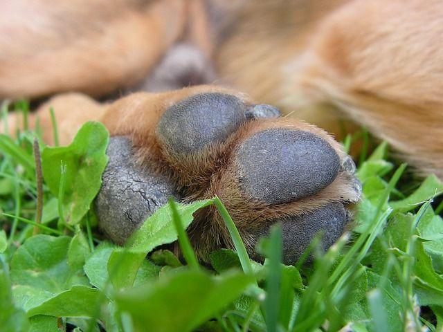 Darum lecken sich Hunde die Pfoten!