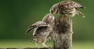 Pünktlich zum Tag des Kusses: Die schönsten Bilder von Tieren beim Küssen!
