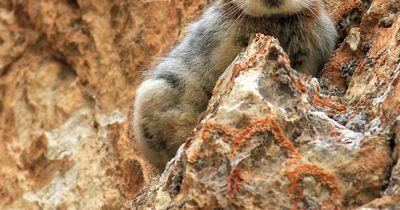 Forscher sind begeistert: Der wilde Teddybär lebt noch