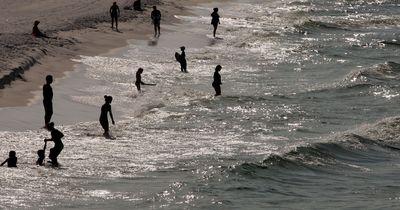 Hai-Alarm an der kalifornischen Küste!