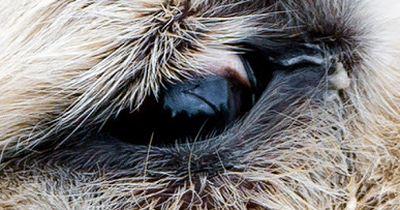 QUIZ: Zu welchem Tier gehört das Auge?