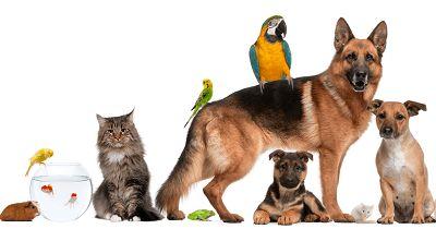 Umfrage bestätigt: Das ist das beliebteste Tier Deutschlands