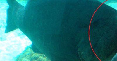Unheimliche Süßwasser-Kreatur entdeckt