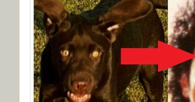 Diese Stars haben Hunde-Doppelgänger!