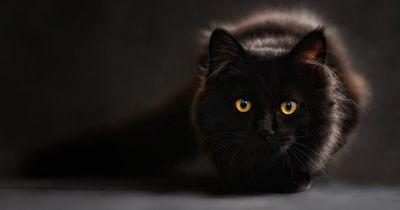 Warum bringen schwarze Katzen, die von links kommen, eigentlich Unglück?
