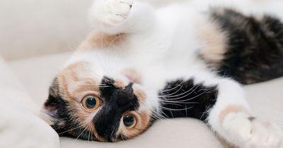Einbruchgefahr: Katzenbesitzer haben große Nachteile