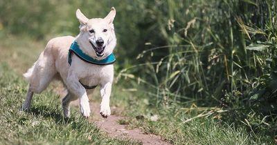 Das Must-Have für alle Hundebesitzer!