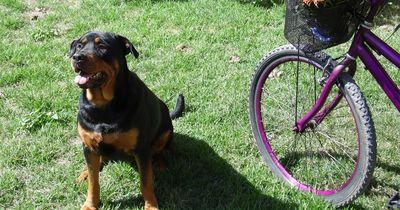 Fahrradfahren mit dem Hund: So klappt es
