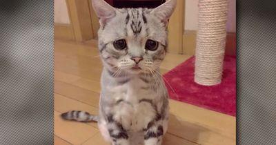 Dürfen wir vorstellen: Luhu, die traurigste Katze der Welt!