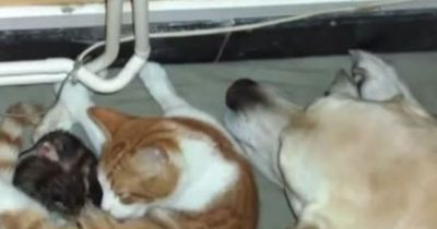 Dieser Hund sieht, wie eine Katze ihre Babys bekommt und tut etwas EINMALIGES!