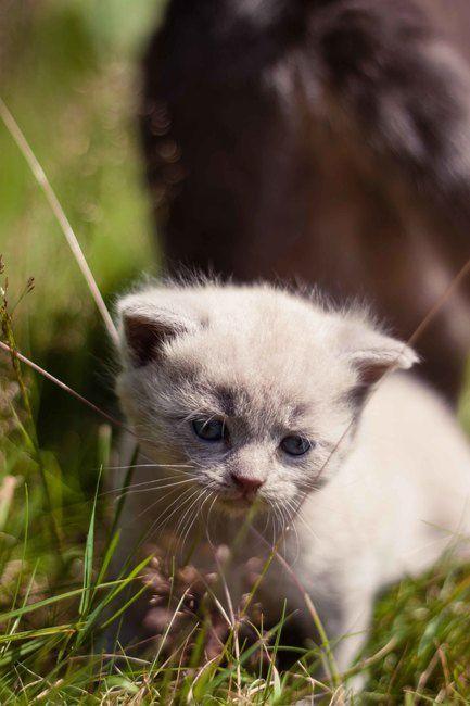 Kätzchen treffen das erste Mal auf Hundewelpen