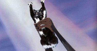 Diese Katze hat mehr erlebt als Du