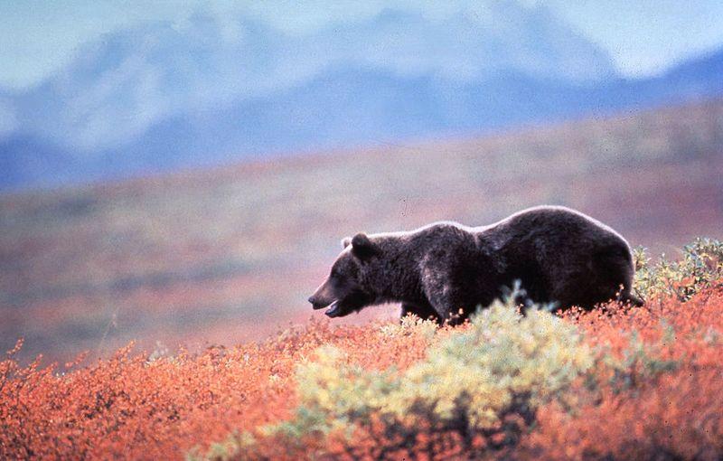 Die 4 heftigsten Begegnungen mit wilden Bären