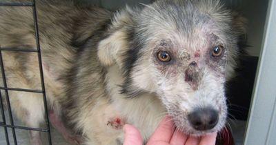Ein Straßenhund wurde von Schulkindern grundlos gequält