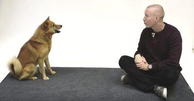 Wie Hunde reagieren, wenn man sie anbellt
