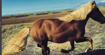 Fun-Quiz: Ist das Pferde- oder Menschenhaar?