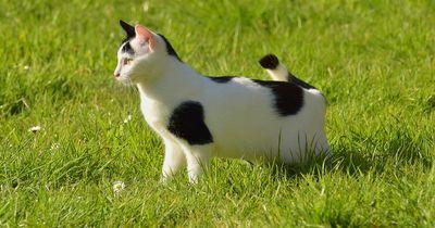 Diese Katzenarten können einen Sonnenbrand bekommen