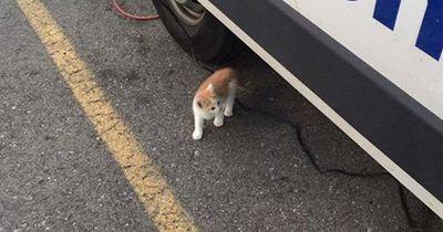 Diese streunende Katze wird zum Nachrichtenstar!