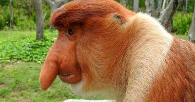Fun-Quiz: Was hat sich die Evolution bloß bei diesen Tieren gedacht?