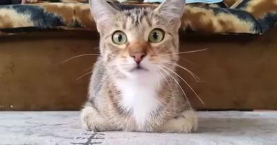 Katze guckt Horrorfilm