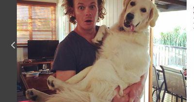 Absurd riesige Hunde, die sich für Schoßhündchen halten