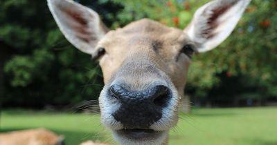 Quiz: Erkennst Du diese Tiere an ihrer Nase?