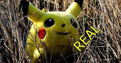 Diese Pokémon existieren im echten Leben!