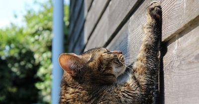Dieser Trick hilft gegen kratzende Katzen